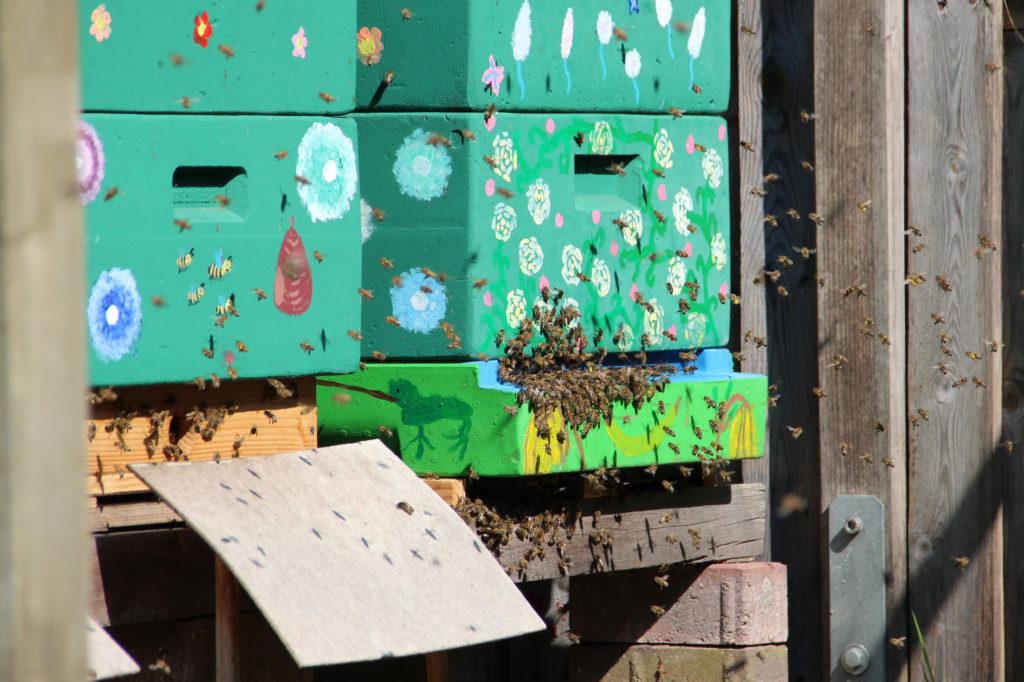 Vielen Bienen vor dem Flugloch von zwei Bienenbeuten.