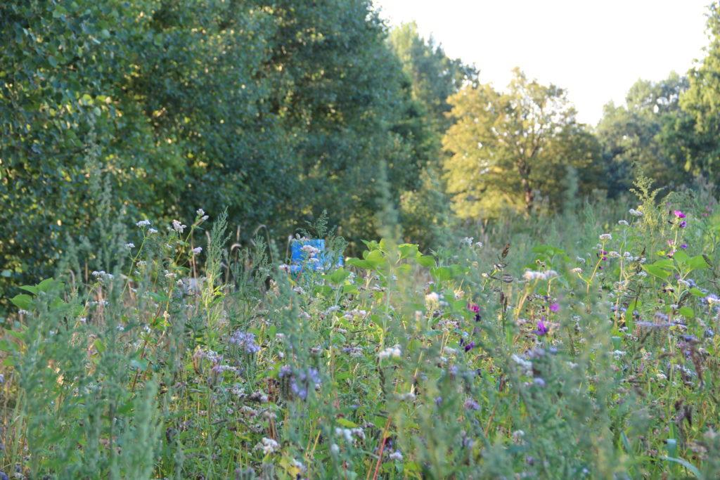 Blühwiese in Holm mit unseren Bienen im Hintergrund