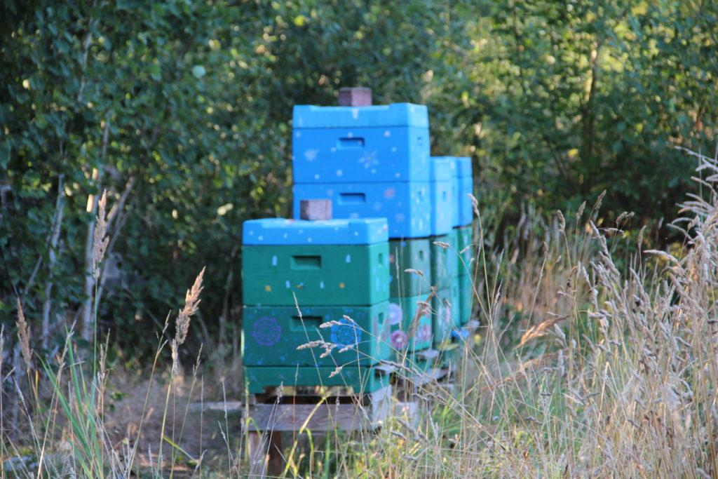 Das Bild zeigt unsere Bienen bzw. die Bienenbeuten am Rande der Blühwiese in Holm