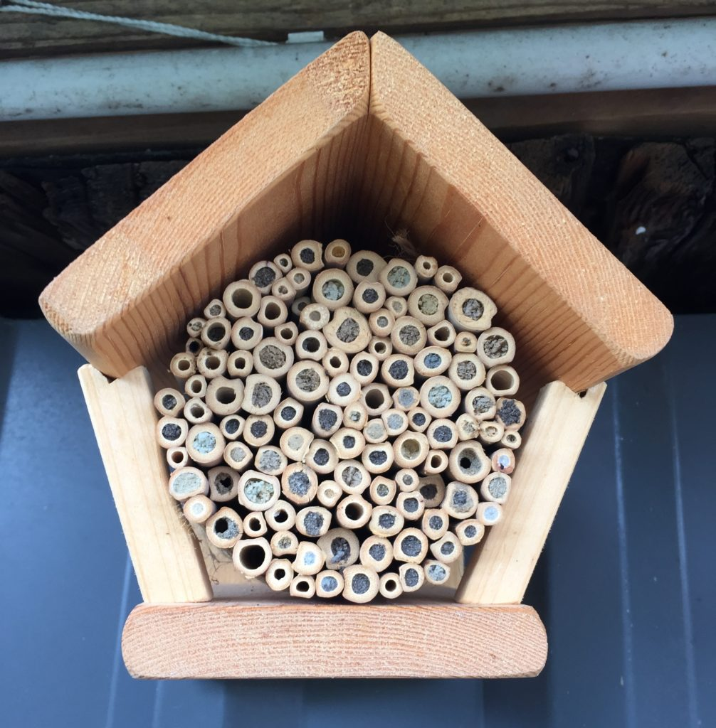 Selbstgebaute und von Insekten bezogene Insektenwohung von vorne fotografiert. Die genutzten, verdeckelten Röhren sind sehr gut zu sehen.